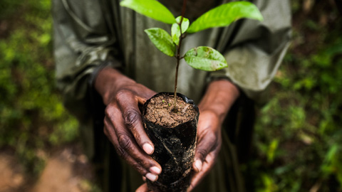 Reflorestamento em Madagascar