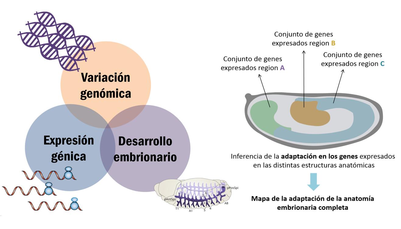 Trazan el primer mapa de la adaptación y la selección natural de la ...