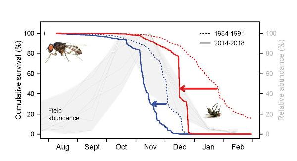 Gráfica Drosophila Subobscura